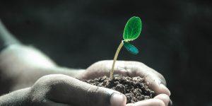 Preparing the Soil: Church Planting