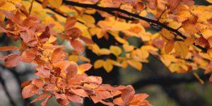 A Life of Thankfulness